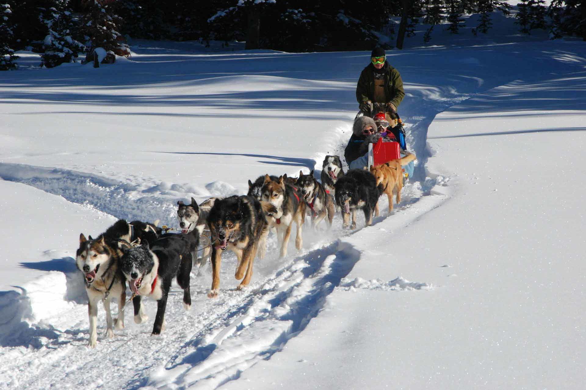 dog-sled-278875_1920