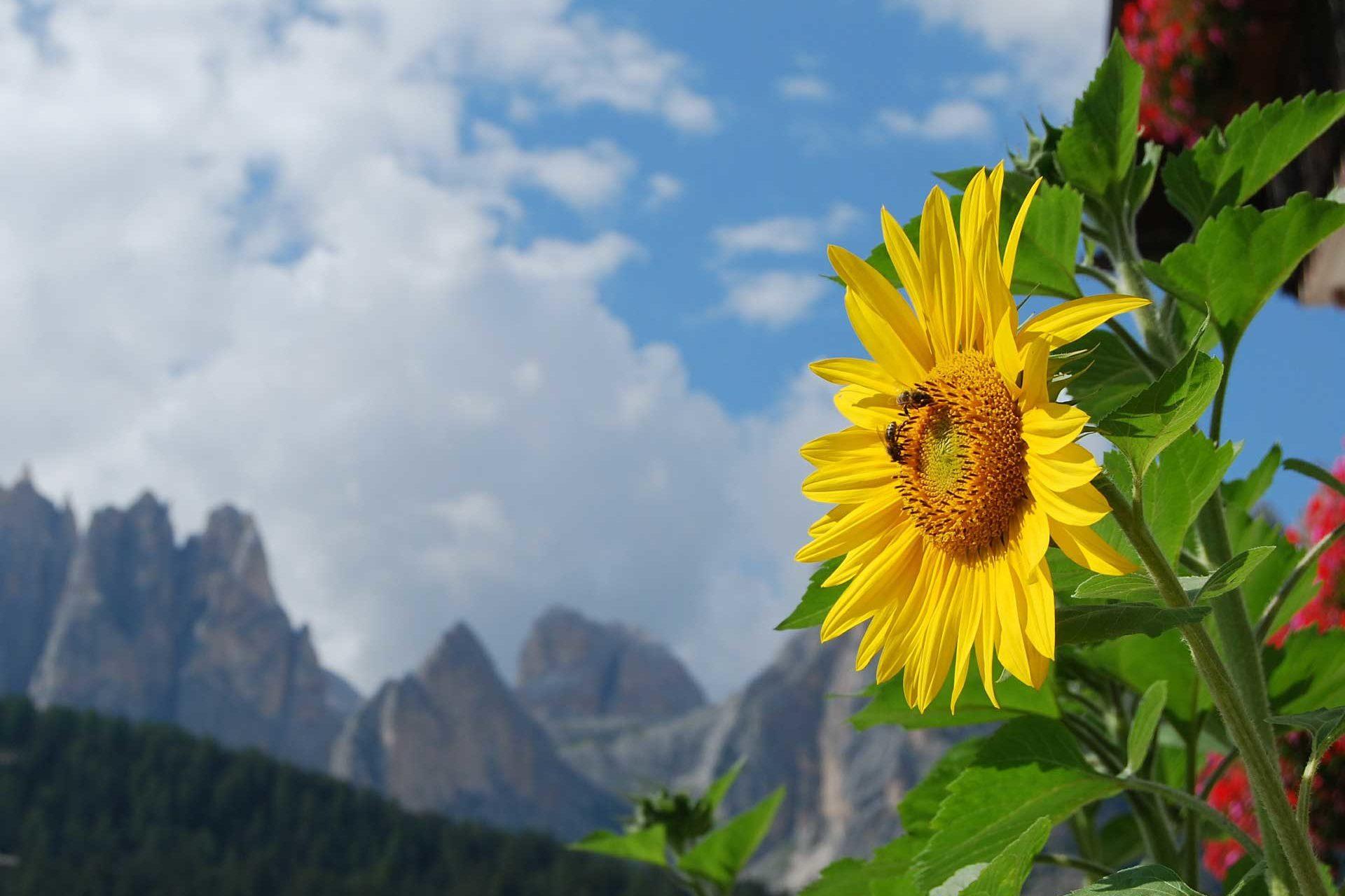 Chalet Lago Antorno sunflower-485652_1920